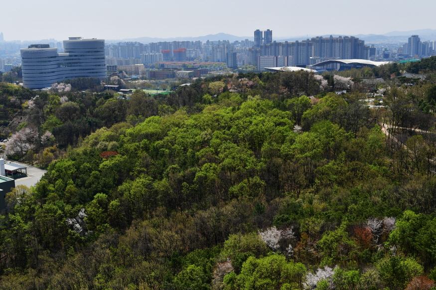 자료사진3)도시숲.JPG